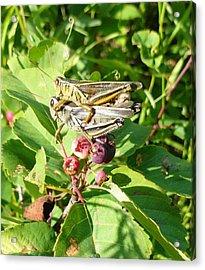 Grasshopper Love Acrylic Print