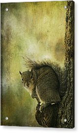 Gray Squirrel Acrylic Print