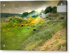Grazing In The Grass Acrylic Print