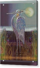 Great Blue Heron Acrylic Print by Lydia L Kramer