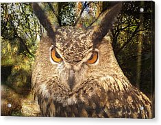 Great Horned Owl 3 Acrylic Print by Marty Koch