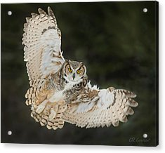 Great Horned Owl Wingspread Acrylic Print