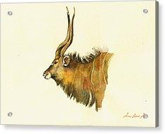 Greater Kudu Acrylic Print by Juan  Bosco