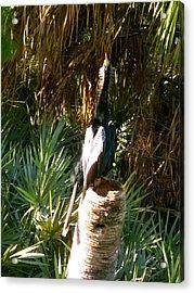 Green Cay Bird Acrylic Print by Fanny Diaz