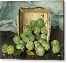 Green Plums Acrylic Print