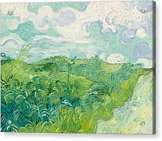 Green Wheat Fields   Auvers Acrylic Print by Vincent Van Gogh