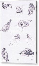 Grouse Acrylic Print by Archibald Thorburn
