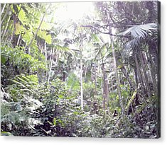 Guilarte's Forest Acrylic Print