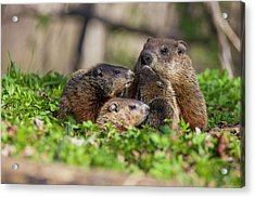 Happy Family Acrylic Print by Mircea Costina Photography