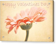 Happy Valentines Day Acrylic Print by Cathie Tyler