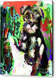 Harley In Hand Acrylic Print by James Thomas