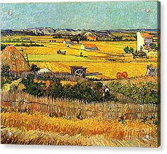 Harvest At La Crau, With Montmajour In The Background Acrylic Print