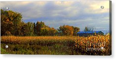Harvest Acrylic Print by Elfriede Fulda