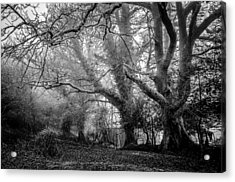 Haunted Forest Acrylic Print by Britten Adams