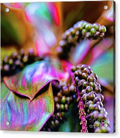 Acrylic Print featuring the photograph Hawaii Plants And Flowers by D Davila