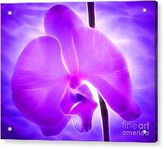 Healing Light Acrylic Print by Krissy Katsimbras