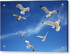 Heavenly Seagulls Acrylic Print