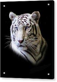 Hector Acrylic Print by Julie L Hoddinott