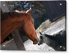 Acrylic Print featuring the photograph Hello Friend by Angela Rath