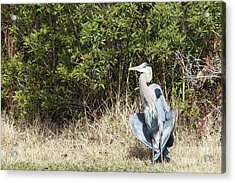 Acrylic Print featuring the photograph Henry The Heron by Benanne Stiens