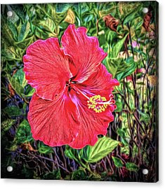 Acrylic Print featuring the photograph Hibiscus Flower by Lewis Mann