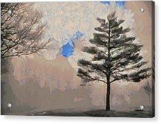 Hickory Acrylic Print by Trish Tritz