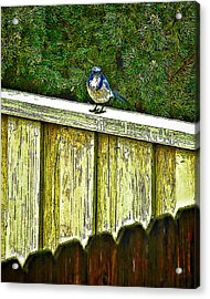 Hiding In Safety Acrylic Print