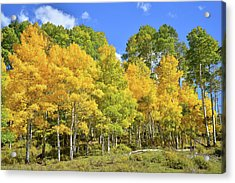 Acrylic Print featuring the photograph High Country Aspens by Ray Mathis