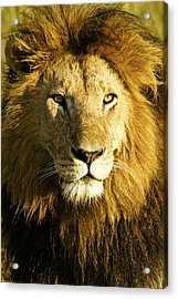 His Royal Highness Acrylic Print by Michele Burgess