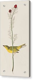 Hooded Warbler Acrylic Print by John James Audubon