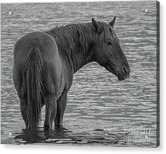 Horse 10 Acrylic Print