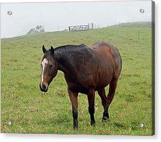 Horse In The Fog Acrylic Print