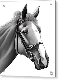 Acrylic Print featuring the painting Horse by Rand Herron