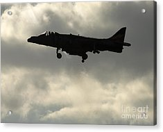 Hovering Acrylic Print by Angel  Tarantella