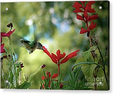 Hummingbird Delight Acrylic Print by Sue Stefanowicz