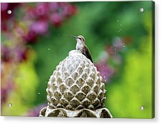 Hummingbird On Garden Water Fountain Acrylic Print by David Gn