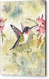 Hummingbird Acrylic Print