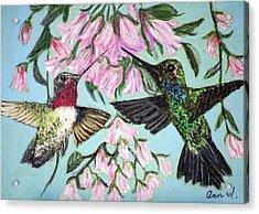 Hummingbirds Acrylic Print by Ann Ingham