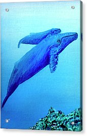 Humpback Mother Whale And Calf #21 Acrylic Print by Donald k Hall