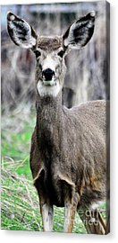 Acrylic Print featuring the photograph I Hear You by Juls Adams