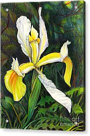 Acrylic Print featuring the drawing I Rise To Thee by Nancy Cupp