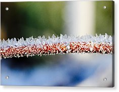 Ice Crystals Acrylic Print by Tiffany Erdman