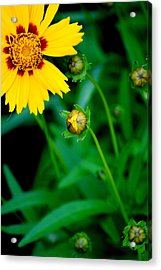 Illumination Acrylic Print by Frozen in Time Fine Art Photography