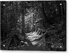 In The Forest Acrylic Print by Cendrine Marrouat