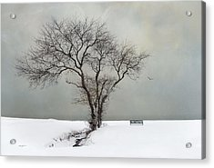 Acrylic Print featuring the photograph  The Midst Of Winter by Robin-Lee Vieira