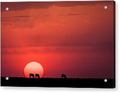 Acrylic Print featuring the photograph In The Sun by Scott Bean