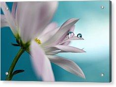 In Turquoise Company Acrylic Print