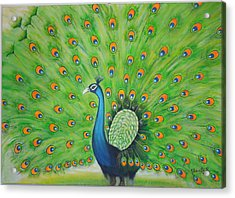 Indian Peacock Acrylic Print by Shanta Rathie