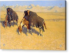 Indians Simulating Buffalo Acrylic Print by Frederic Remington