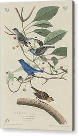 Indigo Bird Acrylic Print by Rob Dreyer
